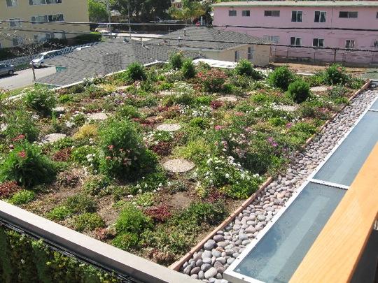 azoteas verdes ciudad de mexico