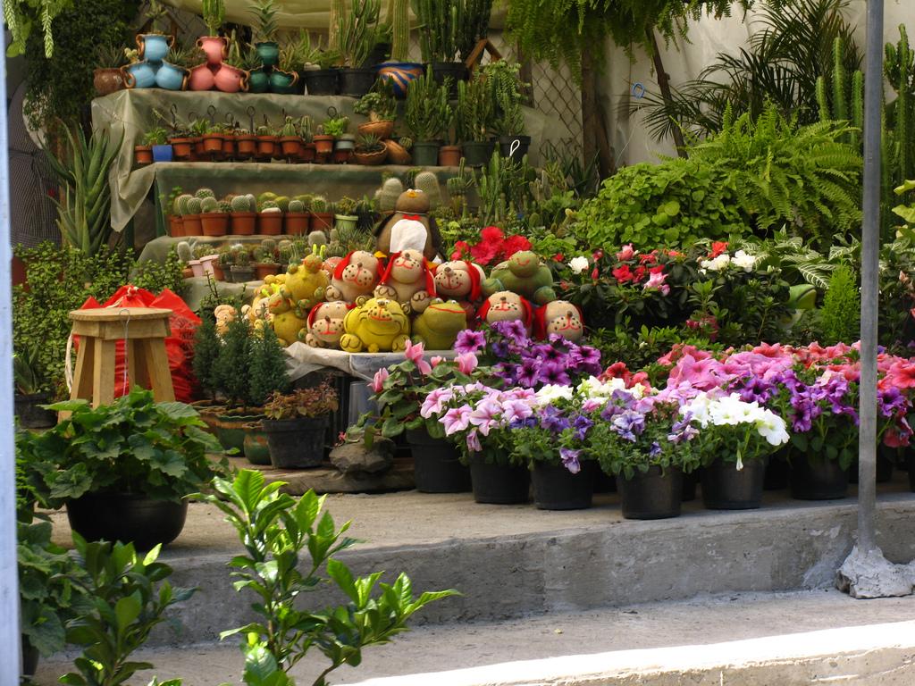 Flores Xochimilco