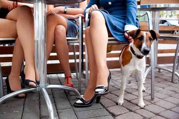 Restaurantes donde seremos bienvenidos con nuestra mascota