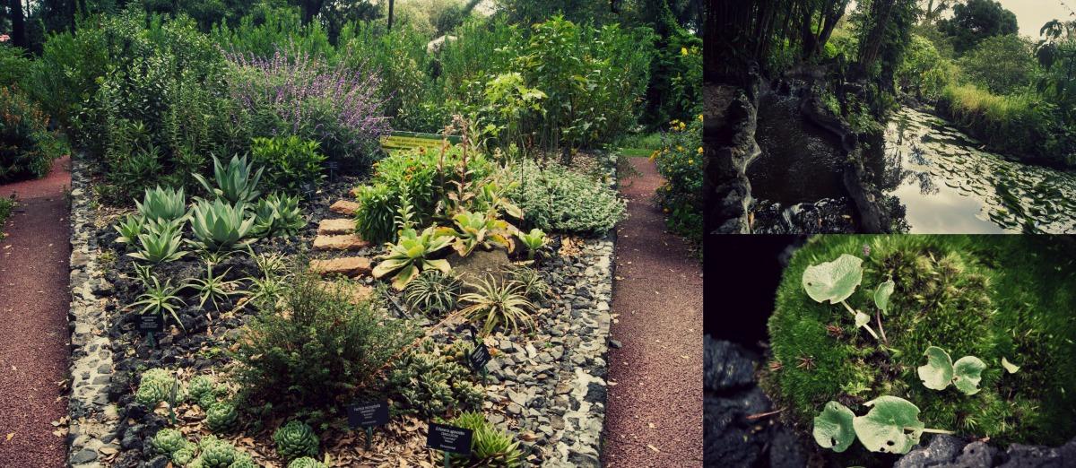 El jard n bot nico de la unam un conservatorio de la for Plantas de un jardin botanico