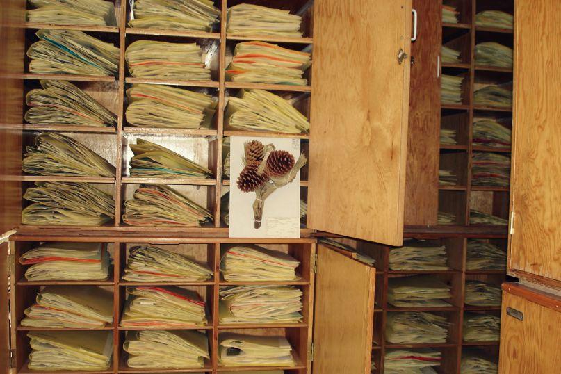 herbario IBUNAM