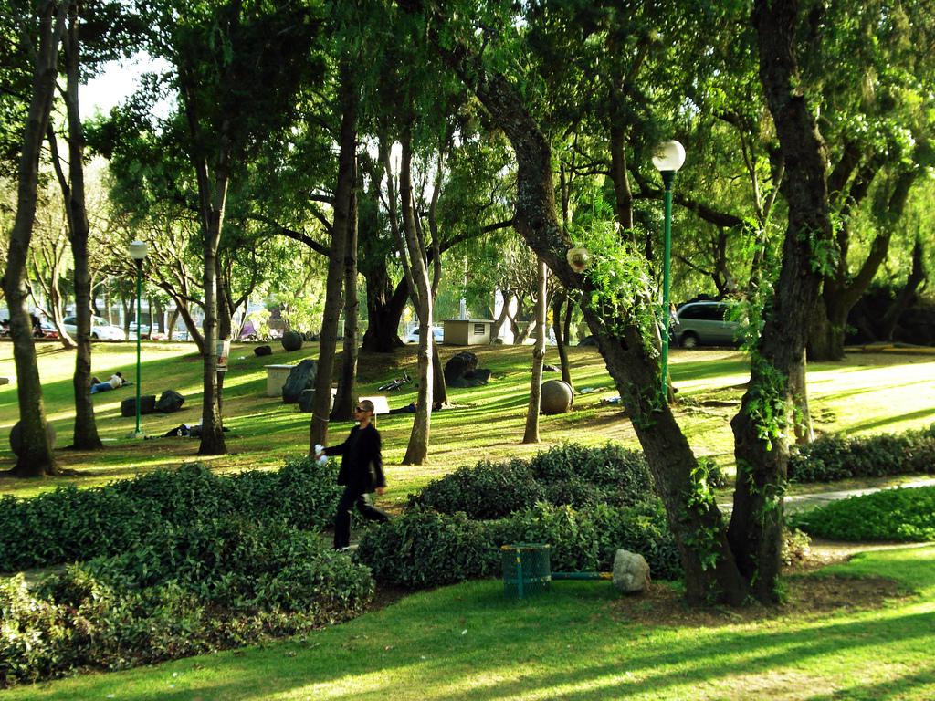 Los mejores lugares para leer en la ciudad de m xico for Jardin botanico unam 2015