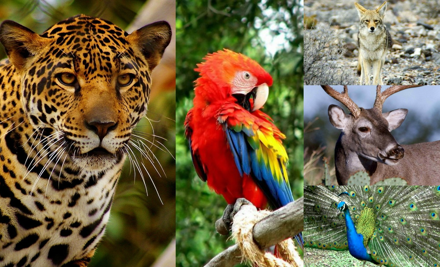 zoologico de moctezuma mexico