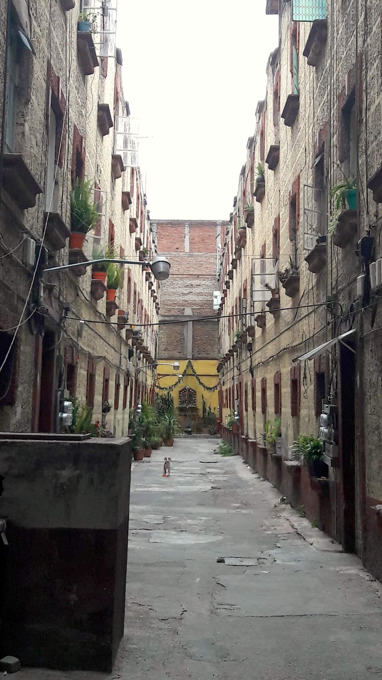 archivo mxcity colonia roma 8