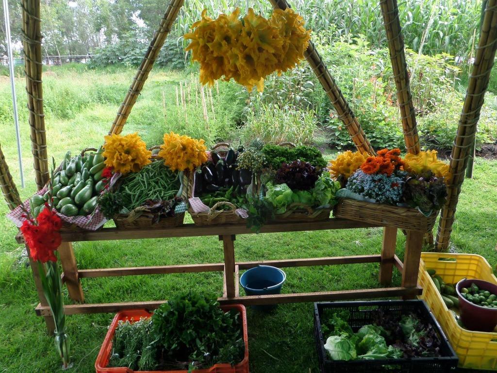 verduras libres de agroquimicos