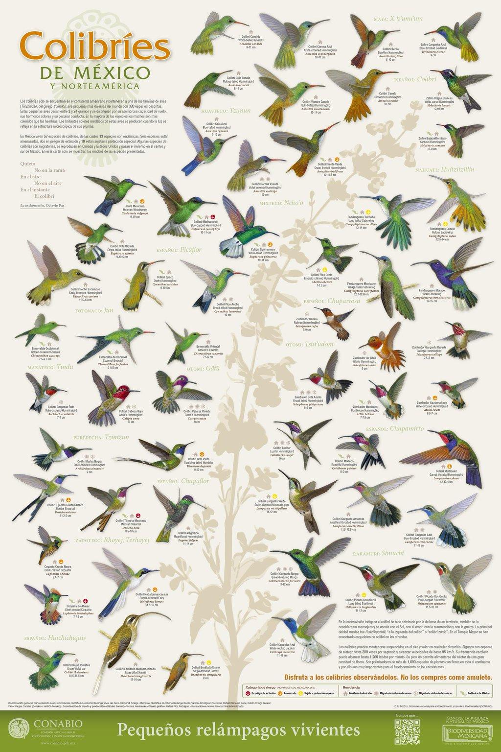 colibries-mexico