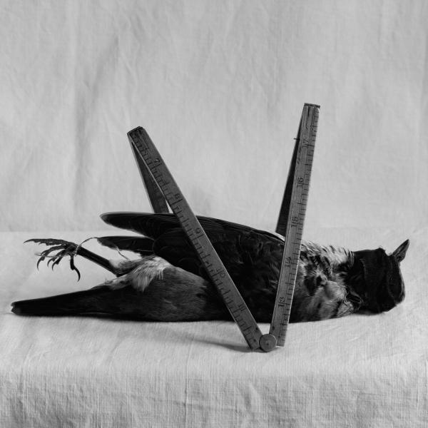 flor garduño-cuarto oscuro--0