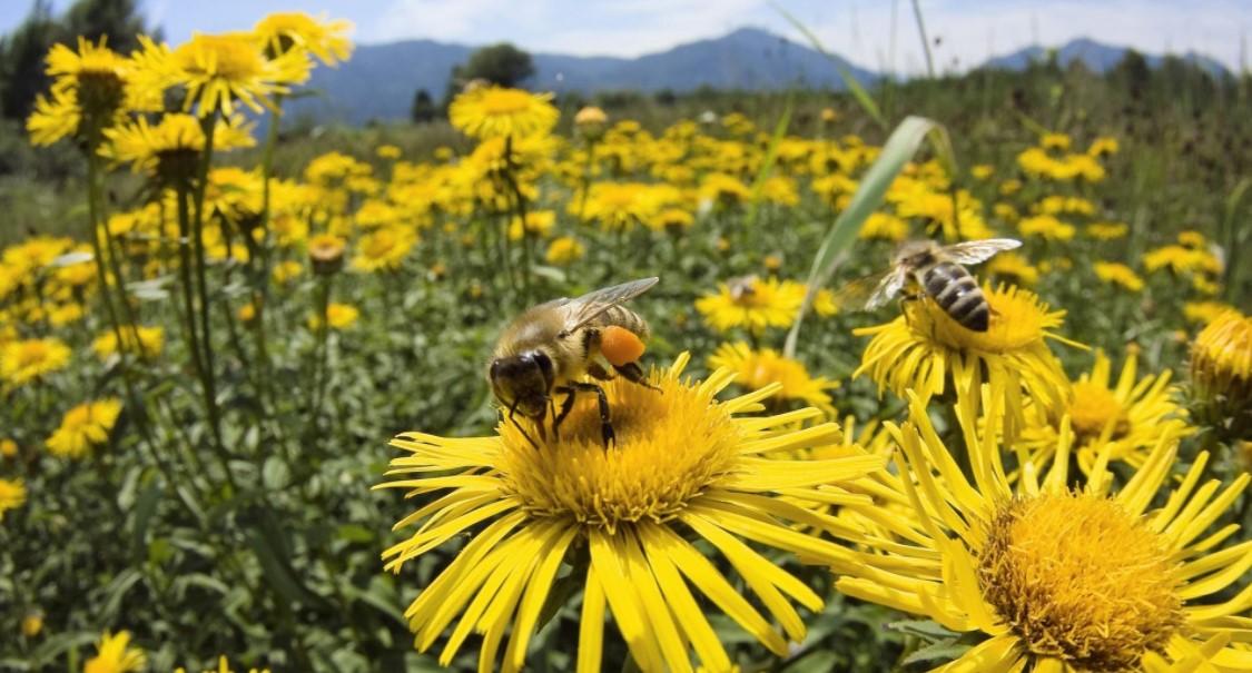 llamado abeja
