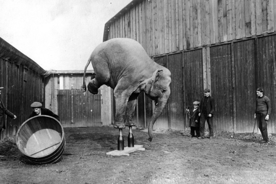 circo orrin