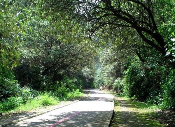 bosque tlalpan