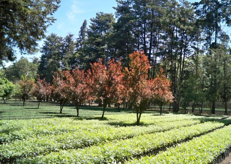 Aqu se cultivan los rboles que habitan la ciudad de for Viveros en capital federal