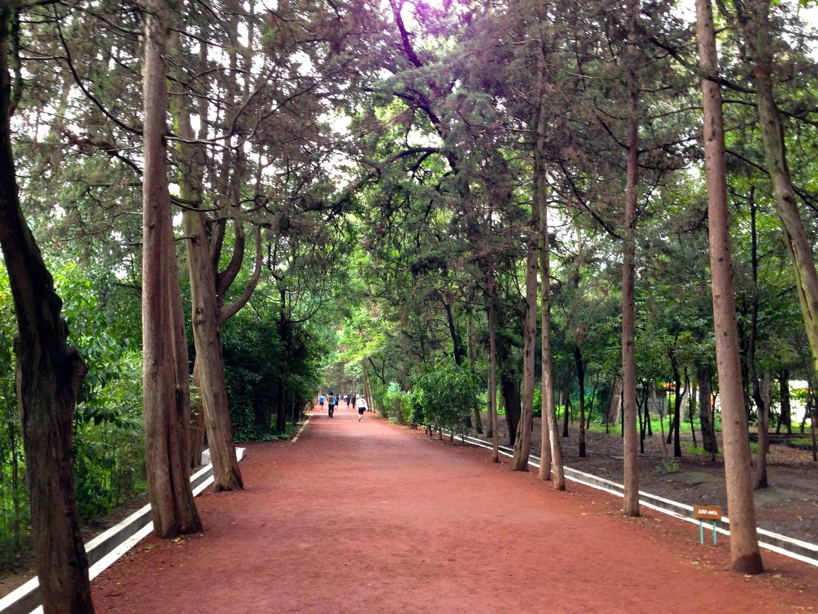 Top 9 los mejores circuitos para correr en la ciudad de for Viveros en capital