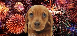 Cómo cuidar a tu perro de los fuegos artificiales