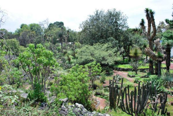 El jard n bot nico de la unam un conservatorio de la for Jardin botanico medicinal