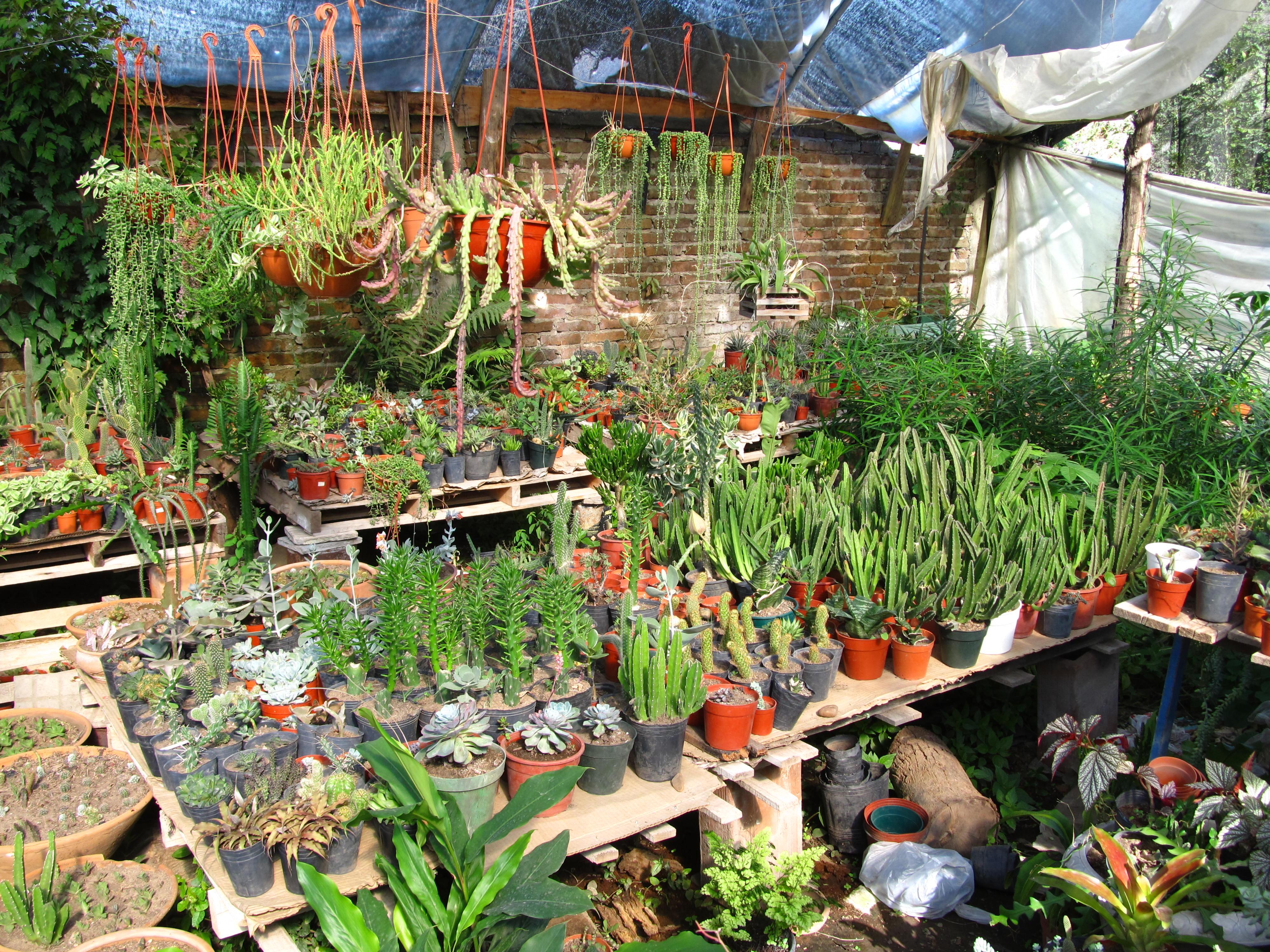 La gu a mxcity para comprar plantas en la ciudad mxcity Jardineria xochimilco