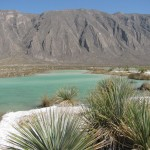 Cuatrocienegas Desert: One of the 38 Municipalities of the State of Coahuila, in the north of Mexico. It is located in the Central Desert Region of the same State and is home to an important ecological reserve which has several endemic organisms.