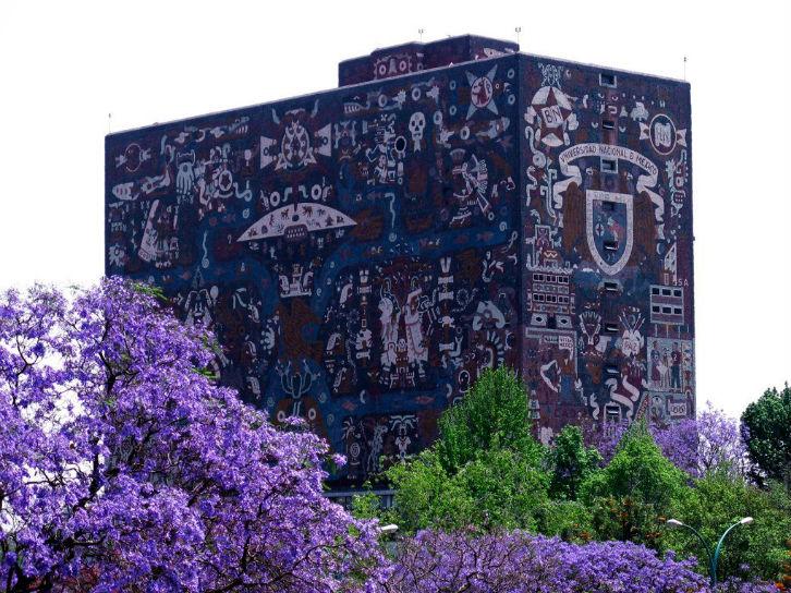 Resultado de imagen para jacaranda ciudad de mexico