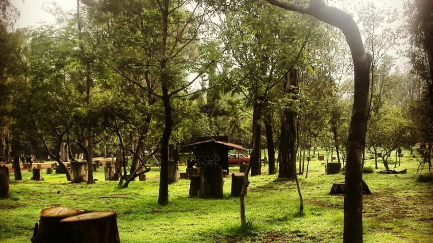 Bosque de Nativitas