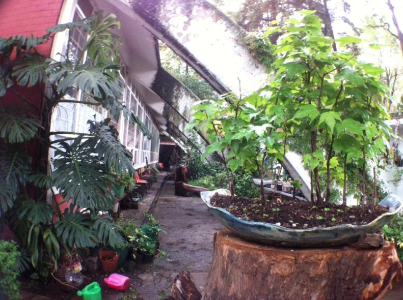 Jardin botanico BENM