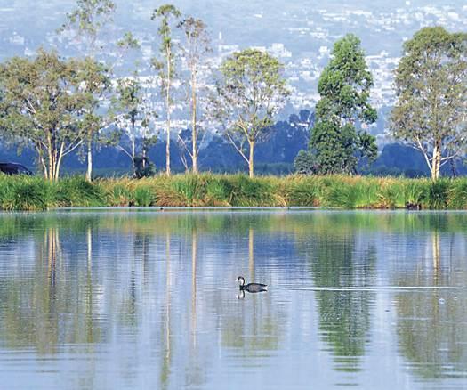 lago xico