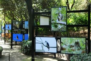 exposición de aves mexicanas