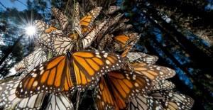 mariposas en la ciudad de méxico