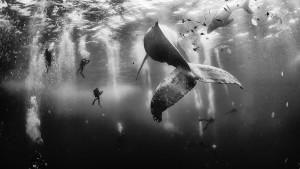 fotógrafo Anuar Patjane