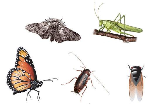 insectos de mexico