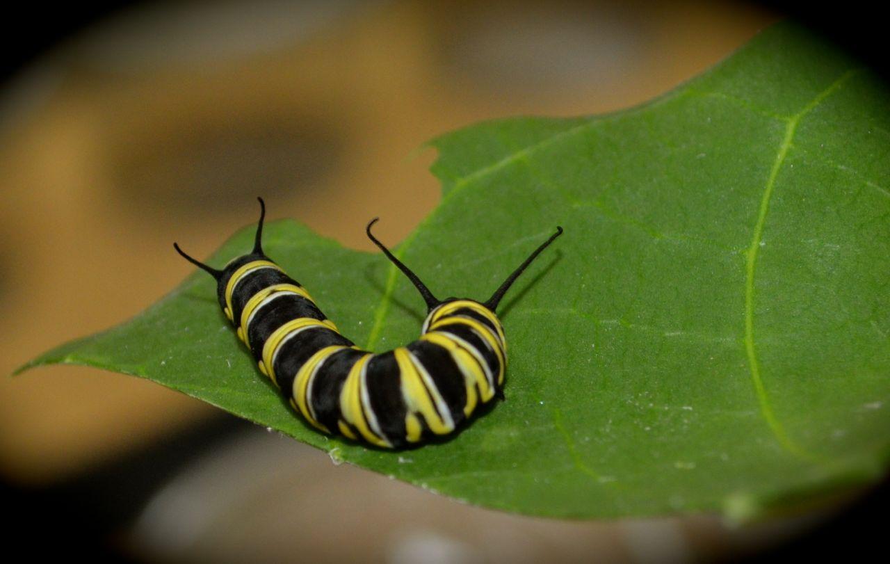 insectos exóticos