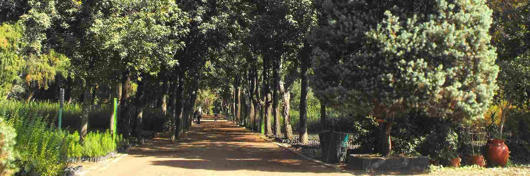 Un poco sobre la verde historia de miguel ngel de quevedo for Viveros en capital