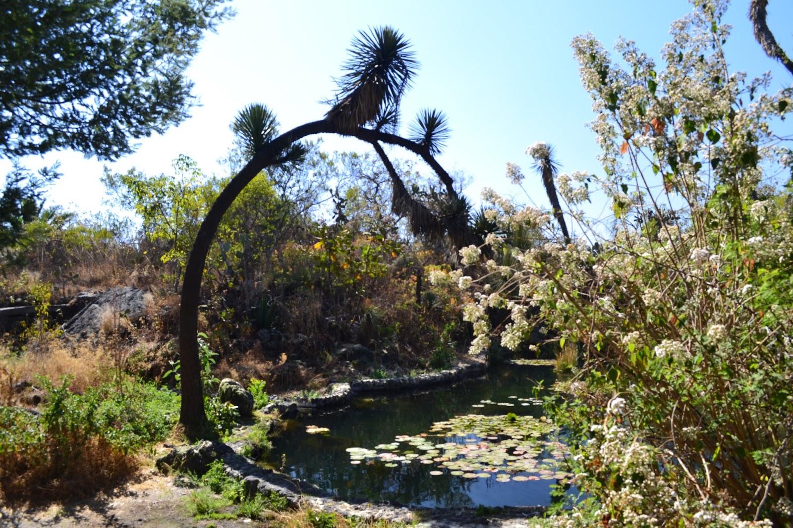 Actividades gratuitas que puedes hacer en la unam Jardin botanico de la unam