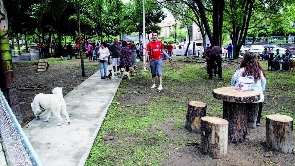 parque hundido perros