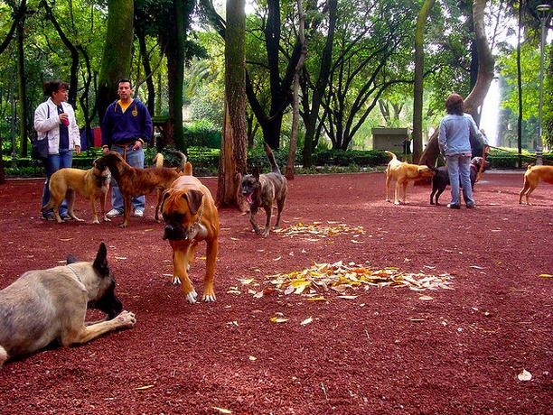 parque mexico condesa perros