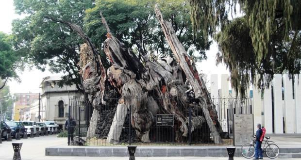 Plaza del Arbol de la Noche Triste
