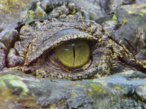el cocodrilo figura divina y alegorica de tenochtitlan