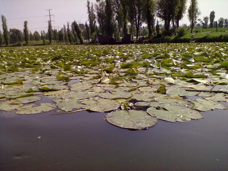 cuemanco xochimilco oferta de verduras libres de agroquimicos