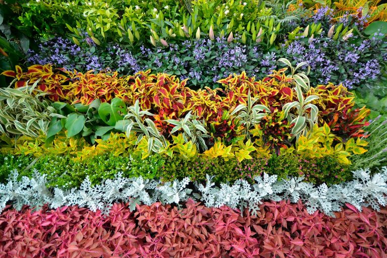 festival de las flores