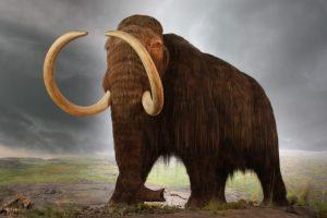 mamut cuenca de mexico