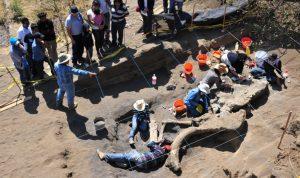 restos de mamut milpa alta