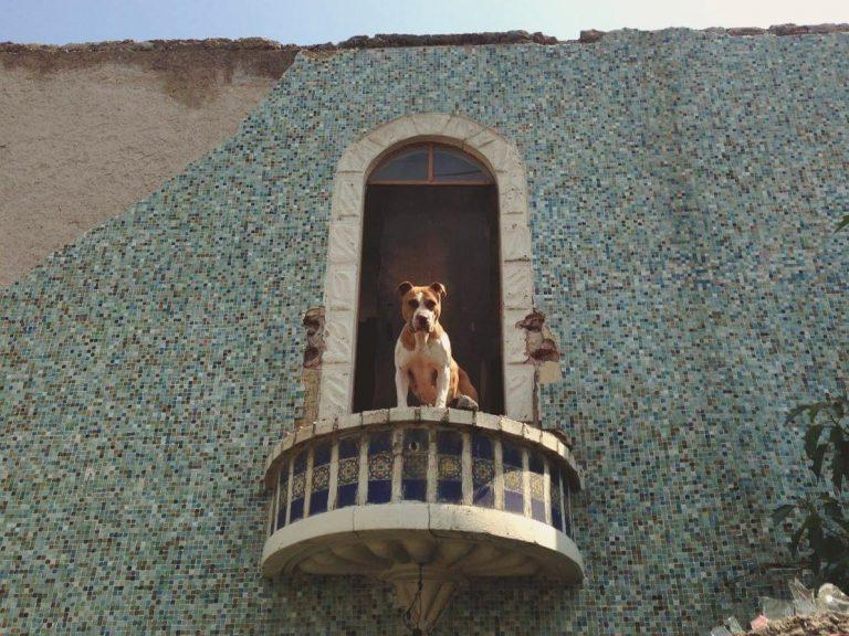 balcones-de-la-colonia-industrial
