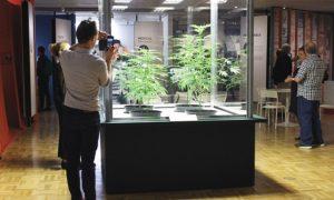 bibliotecas-de-cannabis-ciudad-de-mexico