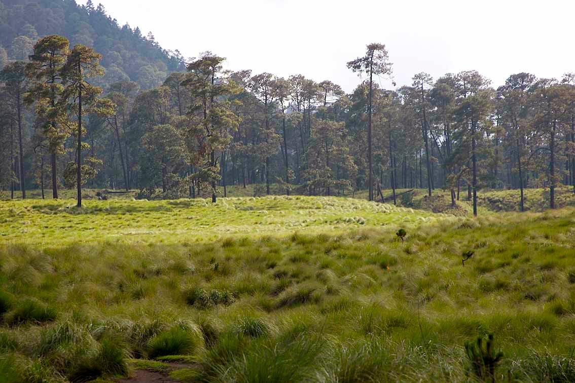 tlalcoyotes-bosques-milpa-alta