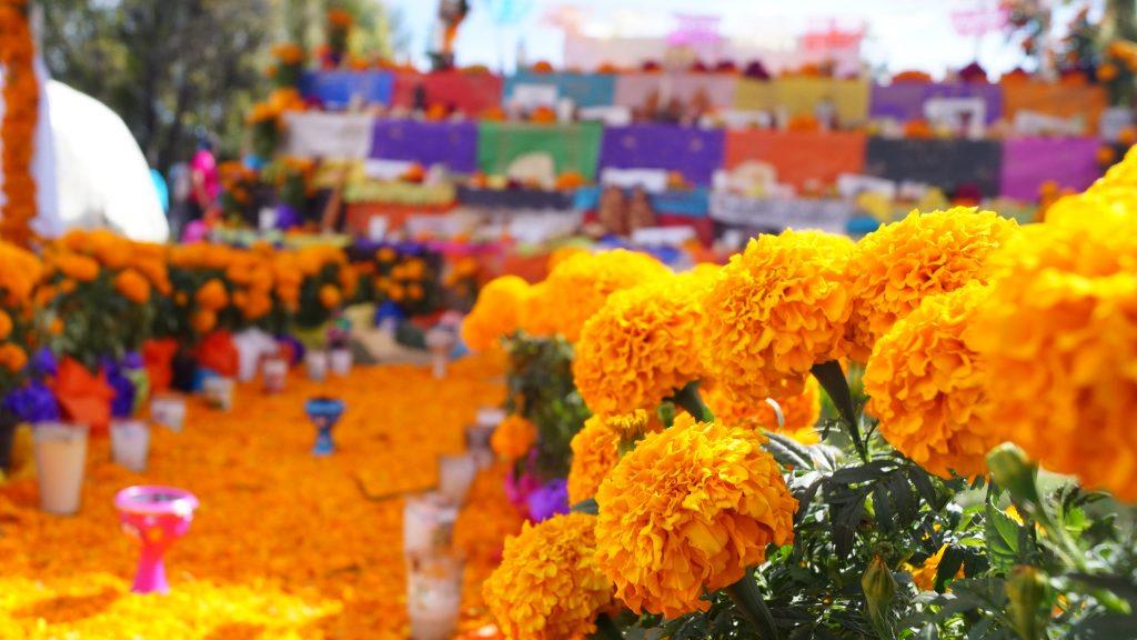 flores_de_cempasuchil
