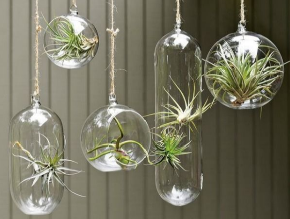 unusual-air-plants-google-search