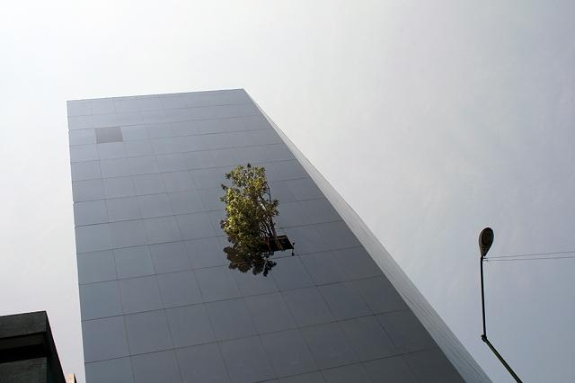 la-torre-del-arbol-edificio-del-arbol-ciudad-de-mexico-df