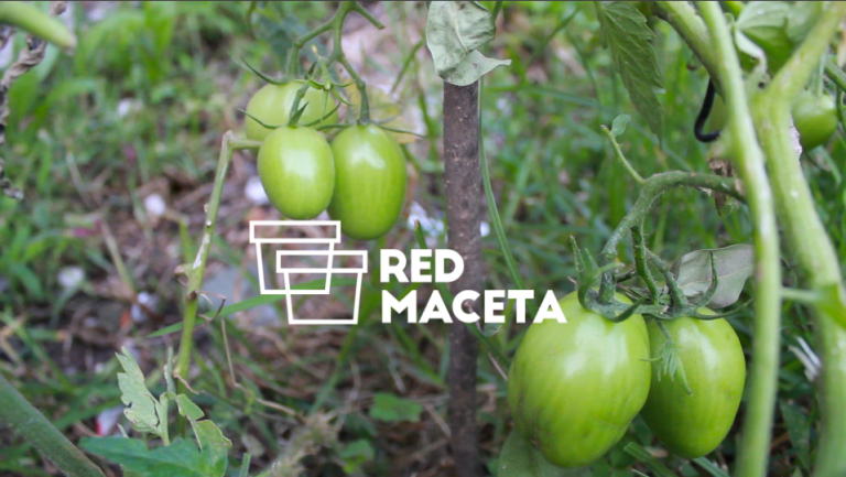 red-maceta