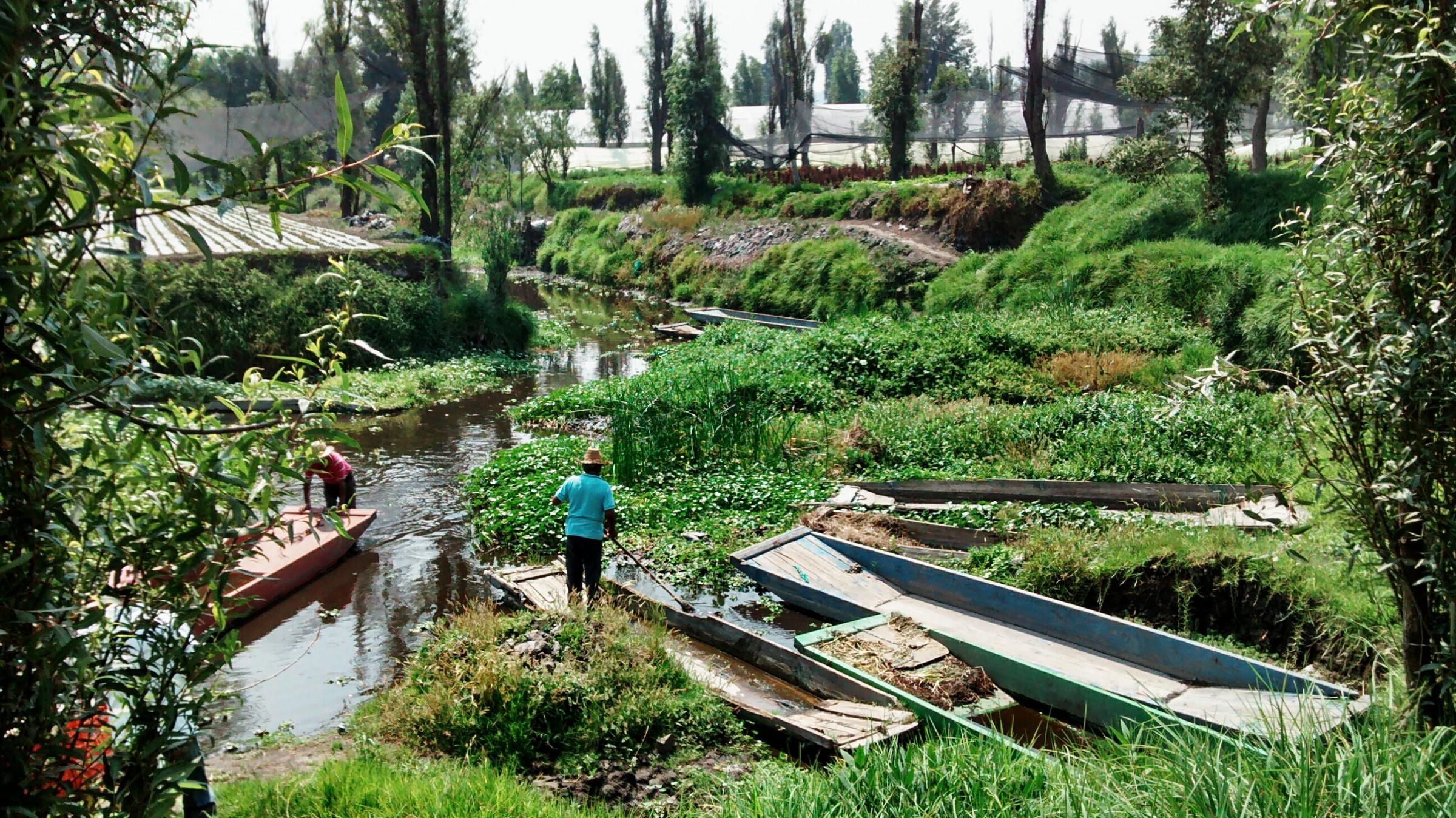 personas trabajando en las chinampas de la CDMX