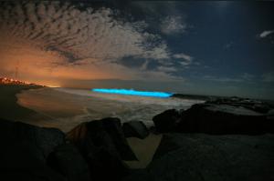 bioluminiscente