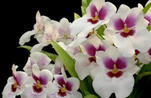 orquidearios
