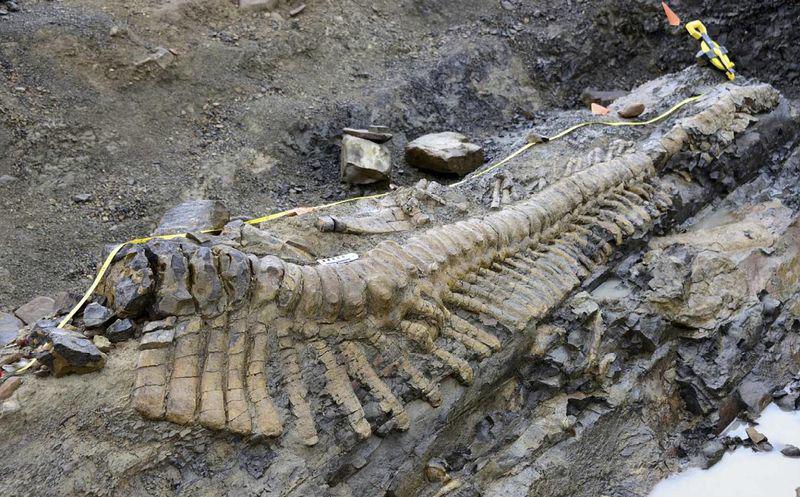 Una Nueva Especie De Dinosaurio Es Descubierta En Mexico Del total de estas piezas fósiles de dinosaurios mexicanos del cretácico, sólo 1% presentó anomalías: una nueva especie de dinosaurio es